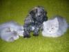 Amigo i 2 kotki