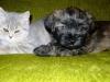 Amigo i kotek